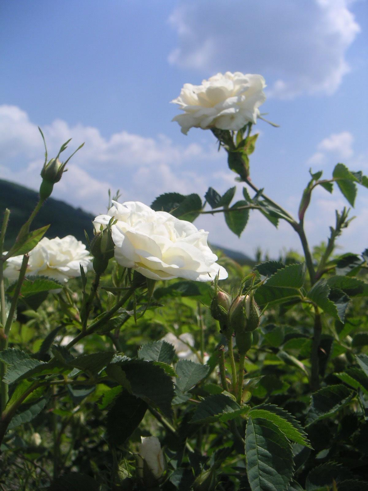 Forum on this topic: Bojana Novakovic, teresa-hill/